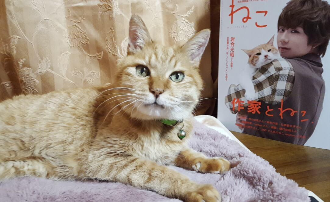「ねこ」増刷おめでとうございます(*ˊᗜˋ*)北山宏光表紙祭り♪